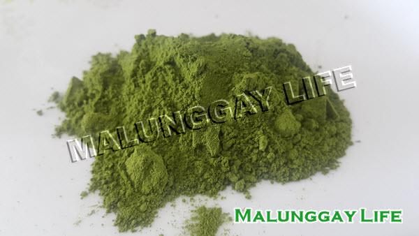 moringa-malunggay-powder