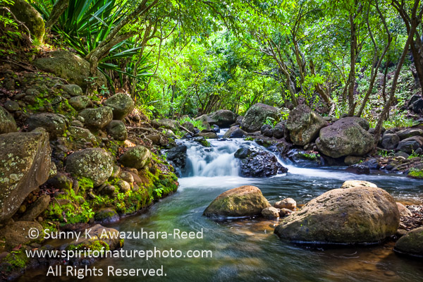Hawaiian Gardens Bromeliad Garden With Red Ti Background Order Tropical Mcbryde Botanical
