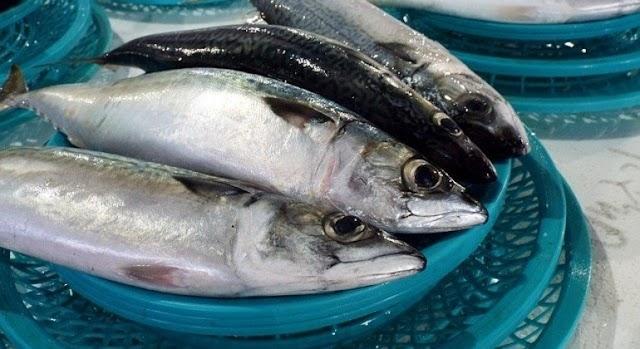 Surto de doença ligada ao consumo de peixe é investigado em 2 estados