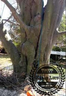 Pohon Unik Sesosok Wanita Memanjat