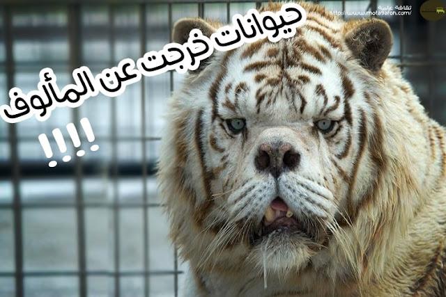 حيوانات خرجت عن المألوف بسبب طفرات جينية