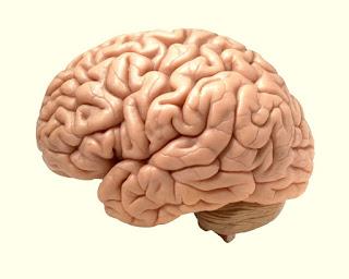 Treatment Of weak Brain-Dimagi Kamzori Aur Keray Ka ilaj https://mqshealthsite.com/dimagi-kamzori-ka-ilaj/