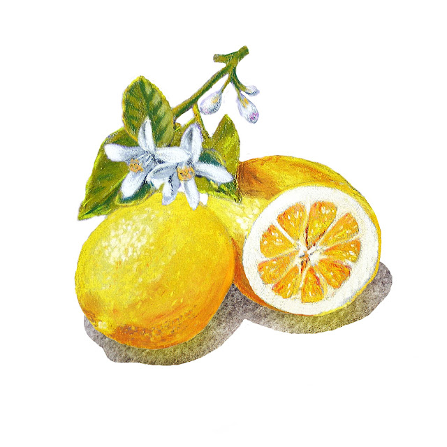 Lemon Marmalade Label