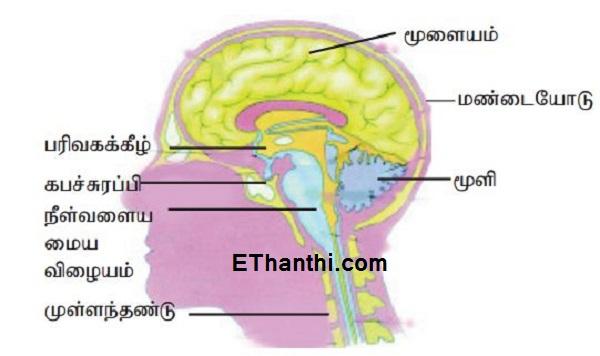 நம்முடைய மூளையை பாதிக்கும் விஷயங்கள் சில | Some of the things that affect our brains !