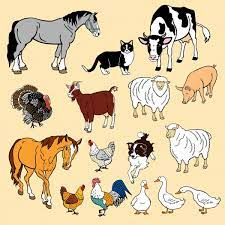 Domestic Animal Name - पाळीव प्राणी