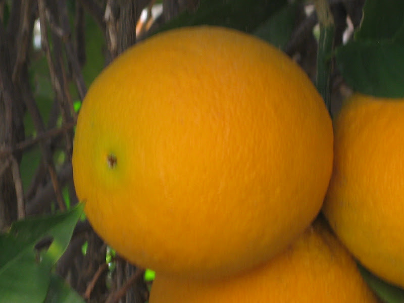 Organic Shape Photography | www.imgkid.com - The Image Kid ...