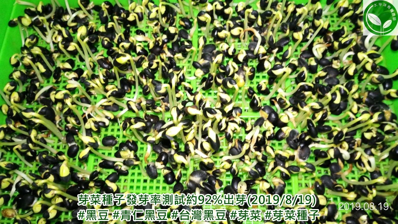 黑豆,黑豆茶怎麼泡,台灣黑豆批發,青仁黑豆茶,黑豆水的煮法,黑豆發芽時間,台灣青仁黑豆,如何煮黑豆水,黑豆種植與施肥,黑豆水怎麼煮
