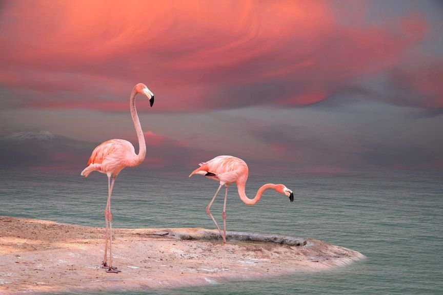 Flamingo Natural Color