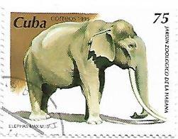 Selo Elefante asiático