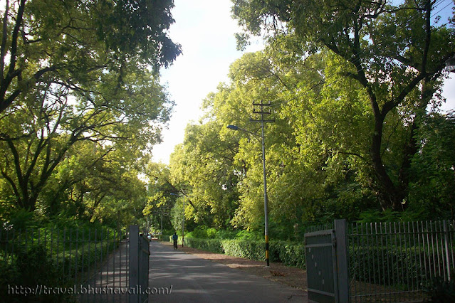 Indian Agricultural Research Institute (IARI), Pusa Hill Forest
