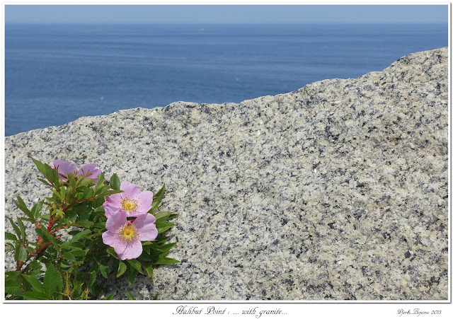 Halibut Point: ... with granite...