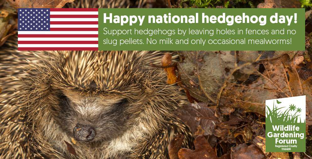 National Hedgehog Day Wishes Images download
