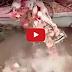 ႏြားဦးေခါင္းတခုလံုးကို စကၠန္႔ပိုင္းအတြင္း စားေသာက္ခဲ့ၾကသည့္ အသားစားငါးအုပ္စု (႐ုပ္သံ)