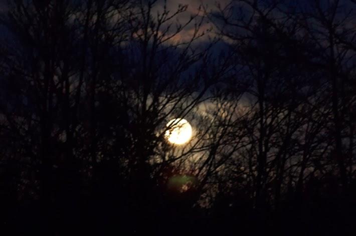 Fuldmåne i vinterens golde have