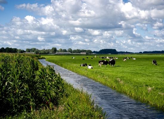 Foto cover Landbouwpraktijk en waterkwaliteit op landbouwbedrijven aangemeld voor derogatie in 2019