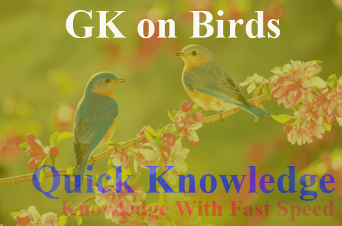 GK on Birds in Hindi