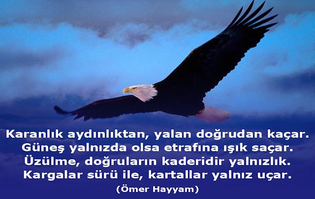 kartal, akbaş kartal, kuş, yırtıcı kuş, gökyüzü, şiir