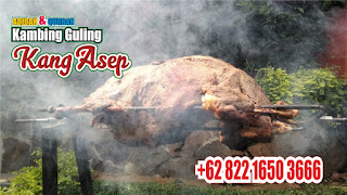 Kambing Guling Muda di Lembang Bandung, kambing guling muda di lembang, kambing guling muda lembang, kambing guling di lembang, kambing guling,