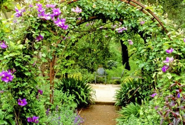 10 plantas trepadoras para cubrir p rgolas o cenadores for Plantas trepadoras para muros
