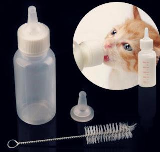 Makanan Anak Kucing Umur 1 Bulan yang Menyehatkan
