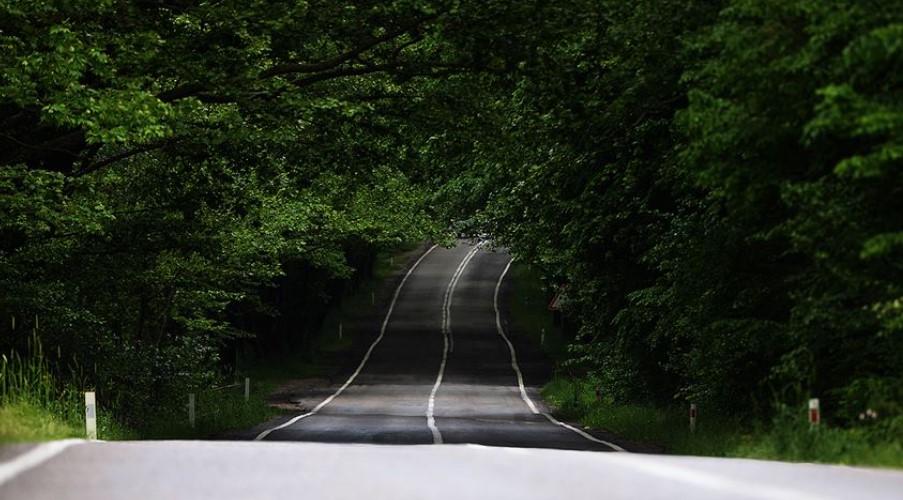 karadenizde gezilecek yerler ağaçlı yol