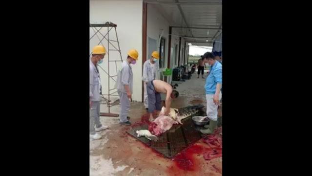 PT OSS Minta Maaf TKA China Bunuh Buaya: Mereka Tak Tahu Aturan Perlindungan Hewan