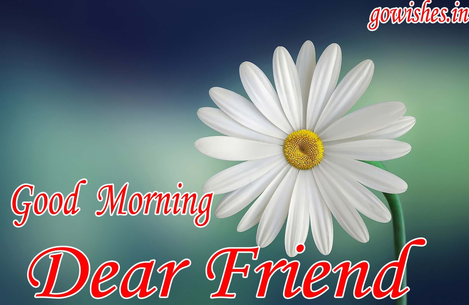 Best Good Morning Images Shayari Walpaper Gif Qutees