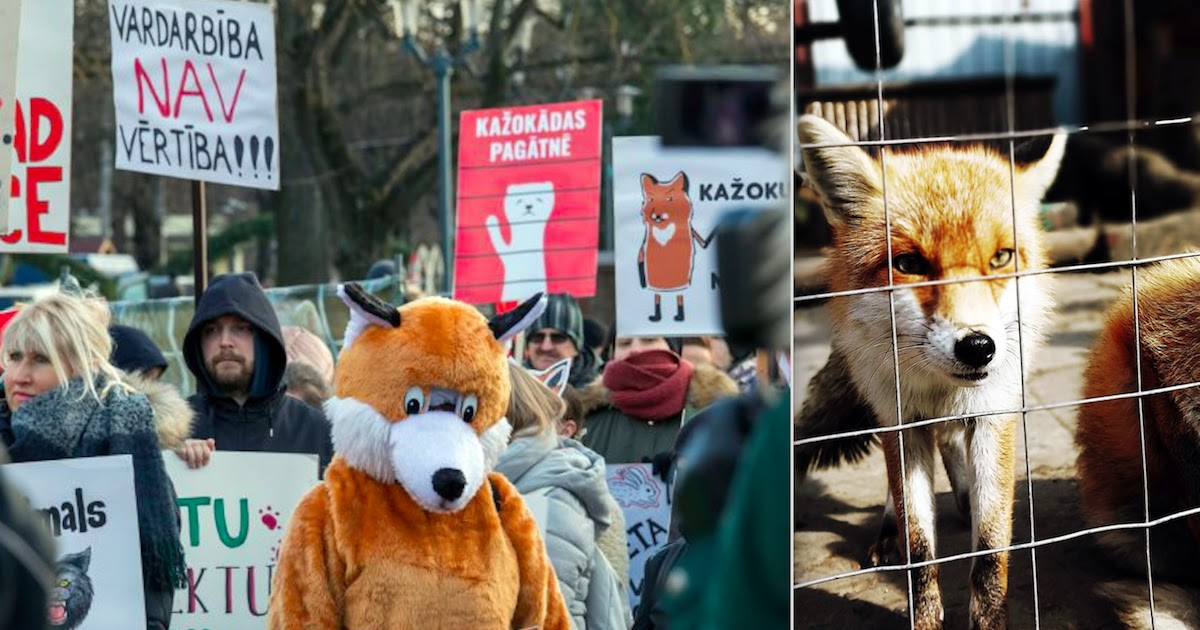 Estonian Parliament Votes To Ban Fur Farming Making It The 14th European Country To End The Practice