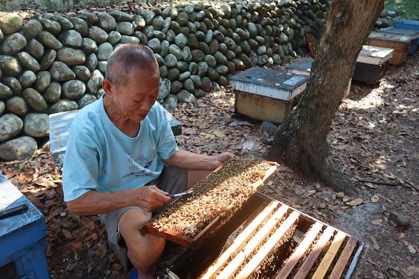 二水鄉養蜂人李東峰 承襲三代經驗再奪冠