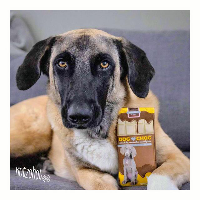 Dog Choc honden chocolade in 4 verschillende smaken