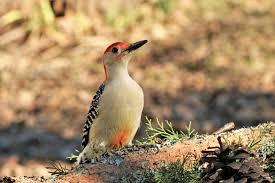 Bird of prey, Bird feathers and species