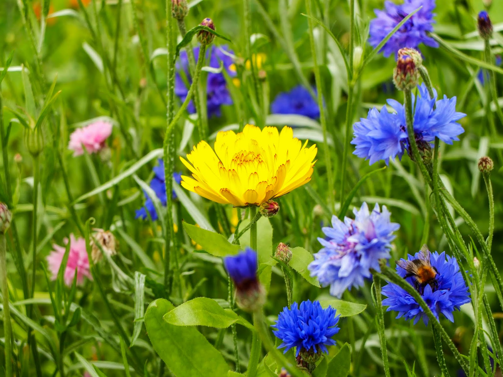 A close up of some wildflowers in a meadow.