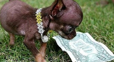 The World 's Smallest Dog