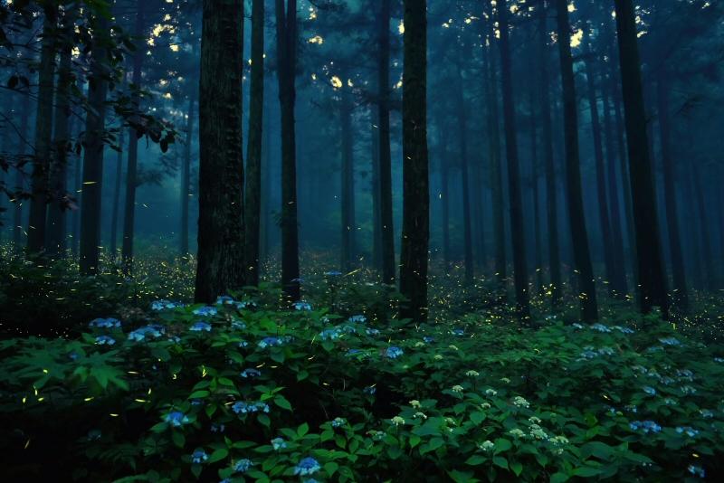국립산림과학원, '운문산반딧불이' 보존 연구 진행