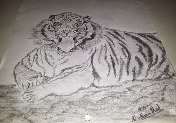 pencil shade realistic tiger