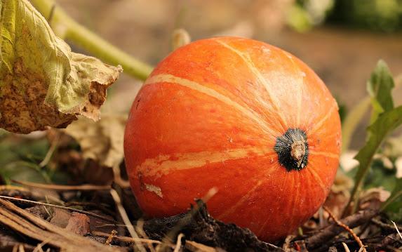 Manfaat buah labu untuk kesehatan