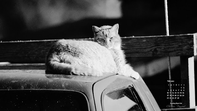 Click on image for full size, right-click to save as wallpaper. February 13 wallpaper, Resting Cat black and white