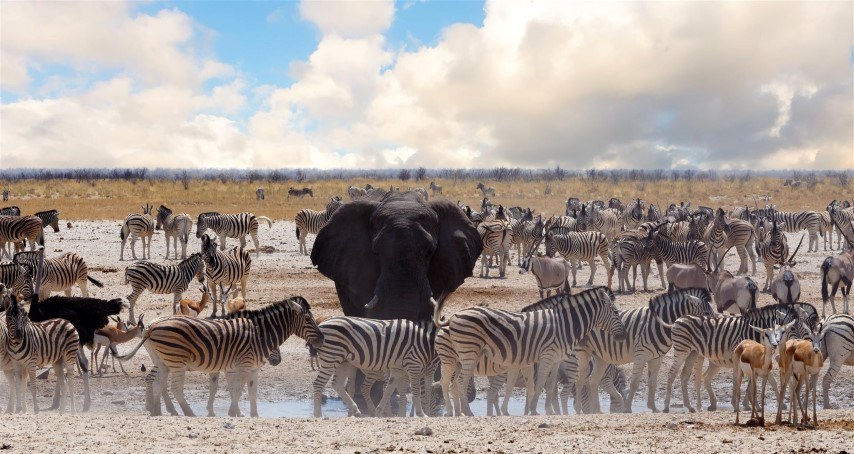 Best Wildlife and Nature Destinations Namibia