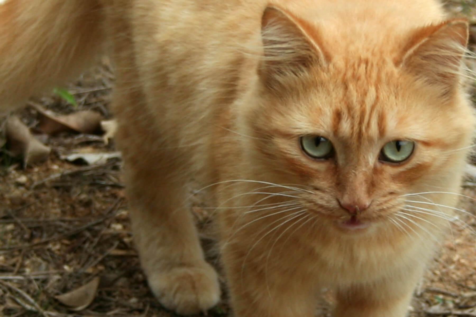 هل القطط تشعر بحزن صاحبها أو لا إليك الإجابة