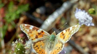 10  Medidas a favor de la biodiversidad en los jardines