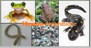 107+ Gambar Peredaran Darah Pada Hewan Amfibi Gratis Terbaik