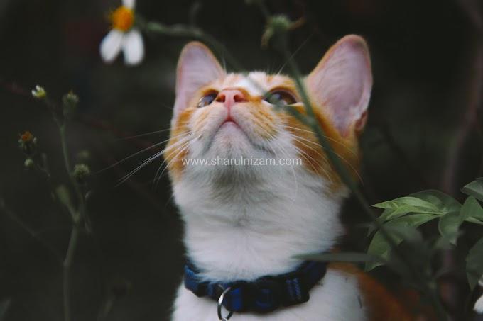 15 Keping Koleksi Gambar Kucing Comel
