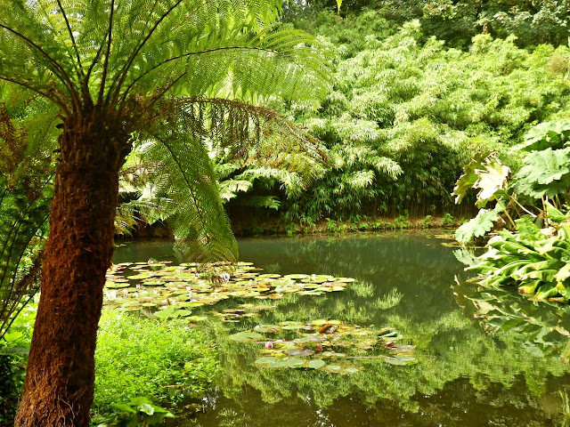 Jungle at Lost Gardens of Heligan