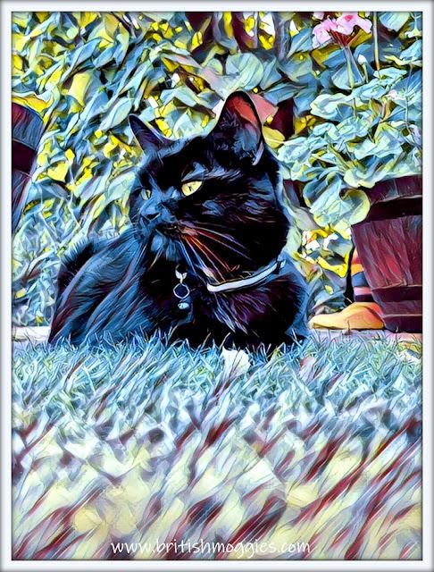 Parsley's Garden Selfie  ©BionicBasil® The Caturday Art Hop www.britishmoggies