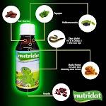 Vitamin Anak Madu Nutridad Penambah Nafsu Makan Kecerdasan Otak