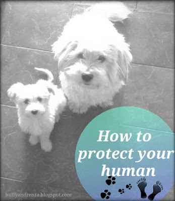 How to protect your human - buffyandrenza.blogspot.com