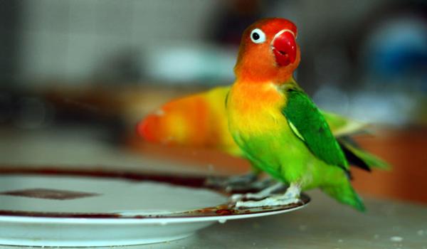 gambar harga burung sirtu