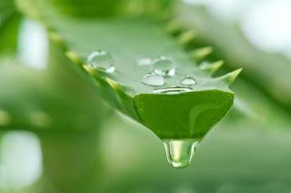 aloe vera gel for treating gum pain