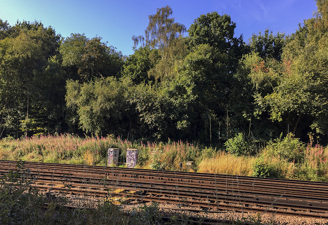 View across the railway.  Walk around the Hawkwood Estate 12, 30 August 2016.