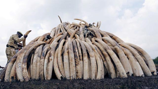 """El """"dragón"""" se apiada del elefante: China, el mayor consumidor de marfil, prohibirá su venta en 2017"""